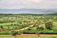 Agricultural fields in Rwanda's Eastern Province.