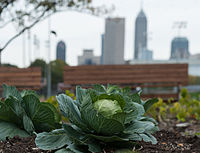 Urban agriculture on the campus of IUPUI