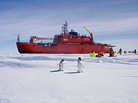 Researchers studying penguins while voyaging aboard the Aurora Australis