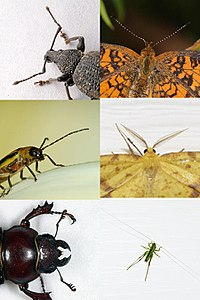 Evolution has produced enormous variety in insects. Pictured are some possible shapes of antennae.