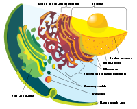 Detail of the eukaryote endomembrane system and its components