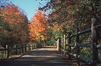 The Blackstone River Greenway in autumn, approximately one mile (1.6 km) south of the Martin St. Bridge