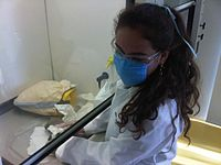 Medical student at a laboratory at Monterrey Institute of Technology and Higher Education, Mexico City.