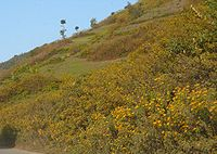 Flowers carpeting the foothills