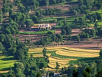 Terrace farming is the most common form of agricultural practice in the state.