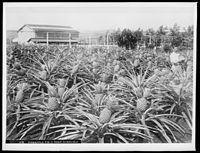 Post-annexation, Hawaii's economy and demographic changes were shaped mostly by growth in the agricultural sector.
