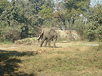 Baby elephant at Lucknow Zoo