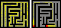 A slime mold solves a maze. The mold (yellow) explored and filled the maze (left). When the researchers placed sugar (red) at two separate points, the mold concentrated most of its mass there and left only the most efficient connection between the two points (right).