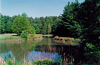 The Blackbird Pond on the Blackbird State Forest Meadows Tract in New Castle County, Delaware