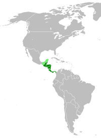 List of mammals of Central America
