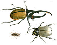 Insecta in the 10th edition of Systema Naturae