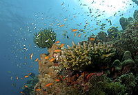 The coral reef at Havelock in Andaman