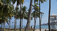The Andaman coast lined with coconut palms