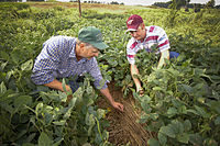Rockingham County leads the state in agricultural sales, accounting for 20%.