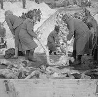 Schutzstaffel (SS) female camp guards removing prisoners' bodies from lorries and carrying them to a mass grave, inside the German Bergen-Belsen concentration camp, 1945