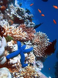 Coral reefs are among the most biodiverse habitats in the world.