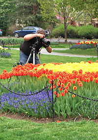 A photographer taking in the floral scene at the Tulip Fest, 2009