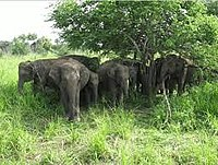 Sathyamangalam Tiger Reserve has the largest elephant population in India.