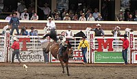 Bronco riding at the Calgary Stampede. The event is one of the world's largest rodeos.