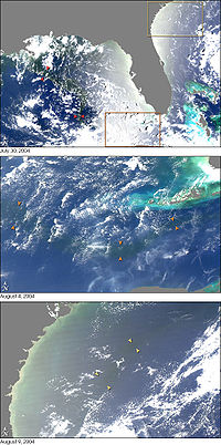 Sequence of NASA MODIS images showing the outflow of fresh water from the Mississippi (arrows) into the Gulf of Mexico (2004)