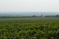 Vineyards in Romania; EU farms are supported by the Common Agricultural Policy, the largest budgetary expenditure.