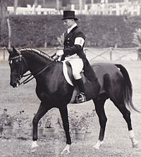 Equestrian at the 1960 Summer Olympics