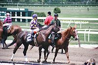Preparing for a horse race at Belmont Park, home of the Belmont Stakes, the final leg of the Triple Crown