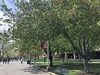 The academic mall across Stony Brook University's main campus