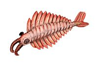 """The Anomalocaris (""""abnormal shrimp"""") was one of the first apex predators and first appeared about 515 Ma."""