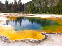 Archaea were initially viewed as extremophiles living in harsh environments, such as the yellow archaea pictured here in a hot spring, but they have since been found in a much broader range of habitats.