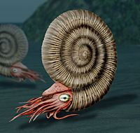 Reconstruction of an ammonite, a highly successful early cephalopod that appeared 400 mya.