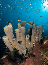 Sponges are perhaps the most basal animals. They have no nervous, digestive or circulatory system.