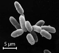 Halobacteria, found in water near saturated with salt, are now recognised as archaea.