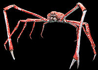 The Japanese spider crab has the longest leg span of any arthropod, reaching {{convert 5.5 m ft}} from claw to claw.<ref>{{cite journal year = 1920 title = An ugly giant crab of Japan url = https://books.google.com/books?id=xCkDAAAAMBAJ&pg=PA42 journal = Popular Science volume = 96 issue = 6 page = 42 }}</ref>