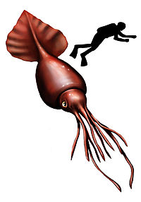 Colossal squid, the largest of all invertebrates<ref name=BBC2008>{{cite news author=Black, Richard title=Colossal squid out of the freezer work=BBC News date=26 April 2008 url=http://news.bbc.co.uk/1/hi/sci/tech/7367774.stm }}</ref>