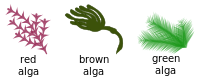 A seaweed is a macroscopic form of